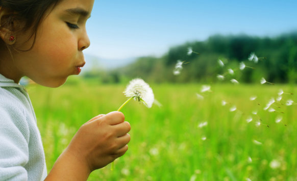 little girl blowing the dandelion flower